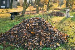 Pile of fallen leaves in a yard. royalty free stock photo