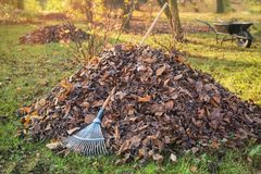 Pile of fallen leaves in a yard. royalty free stock photos
