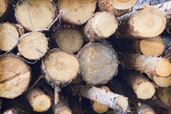 Pile of felled tree trunks Royalty Free Stock Photography