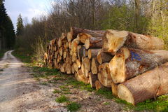 Pile of felled trees in the black forest in Germany Royalty Free Stock Photo