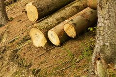 Pile of felled trees stock images