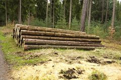 Pile of felled trees. People cut down trees in forest, felled trees lying in the forest Royalty Free Stock Photography