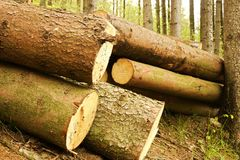 Pile of felled trees. People cut down trees in forest, felled trees lying in the forest, numbered tribes Stock Images