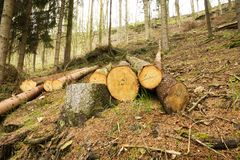 Pile of felled trees royalty free stock photography