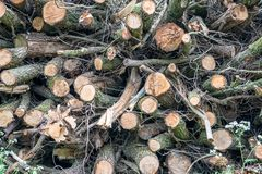 A pile of felled trees ready to be used as fuel for the fireplace royalty free stock photos