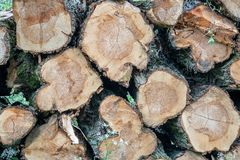 A pile of felled trees ready to be used as fuel for the fireplace royalty free stock photography