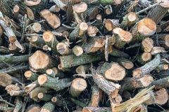 A pile of felled trees ready to be used as fuel for the fireplace stock image