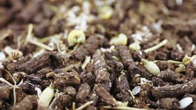 Ivan tea with chamomile stock video