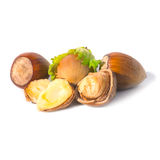 Pile of filbert nuts Stock Photo