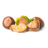 Pile of filbert nuts Royalty Free Stock Image