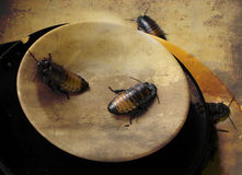 Pile of filthy dishes infested with roaches Royalty Free Stock Photography