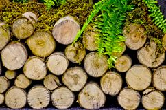 Pile fire wood Stock Photography