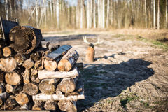Pile of fire wood in countryside Stock Photos