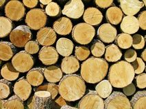 Pile of firewood Stock Photos