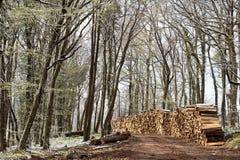 Pile of firewood Stock Photos