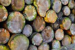 Pile of firewood. In a forest near Prüm, Rheinland-Pfalz, Germany. Evening light, Adobe RGB Royalty Free Stock Photo