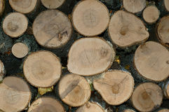 Pile of firewood. Round only Royalty Free Stock Images