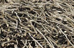 Pile of firewood as backround stock photo
