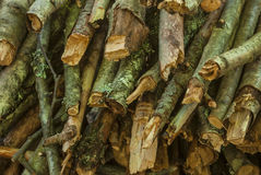 Pile of firewood. A pile of dry branches of pine and birch Royalty Free Stock Photography