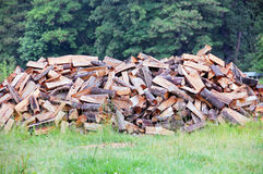 Pile of firewood in forest. A pile of cut logs/firewood in green forest stock photography