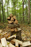 Pile of firewood in the forest. Royalty Free Stock Photos