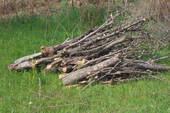 Pile of firewood on grass stock photography