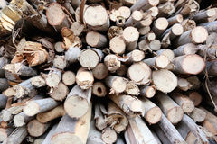 Pile of firewood made from the tree of dead. Royalty Free Stock Images