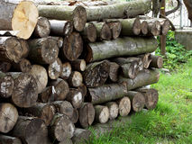 Pile of firewood. Preparation of firewood for the winter stock photo