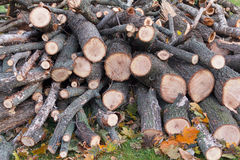 Pile of firewood stacked Stock Image
