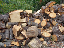 Pile of firewood stacked near the forest. Pile of firewood, preparation for winter season in the village Royalty Free Stock Images