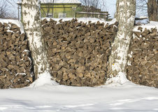 The pile of firewood. Between two birch trees on a clear winter day stock images