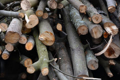 Pile of the firewoods Stock Photography