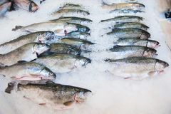 Pile of fish on ice. Fish meat product on shelf in the store. Pile of fish on ice Royalty Free Stock Photography