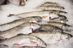 Pile of fish on ice. Fish meat product on shelf in the store. Pile of fish on ice Stock Photography