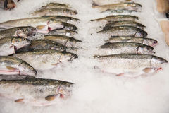 Pile of fish on ice. Fish meat product on shelf in the store. Pile of fish on ice Stock Images