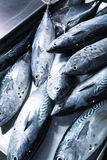 Pile of fish on a market Royalty Free Stock Photos