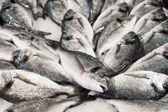 Pile of fish Royalty Free Stock Photos