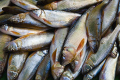 A Pile of Fishes. For sale in a morning market Royalty Free Stock Images