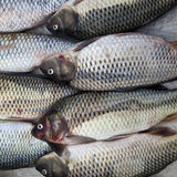 A pile of fishes. A pile of fresh fishes for sale at a market Stock Photo