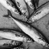 A pile of fishes. Eyes wide open Royalty Free Stock Photography