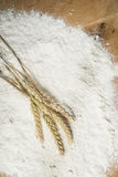 Pile of flour and wheat Royalty Free Stock Photo