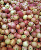 Pile of fresh apples Stock Photography