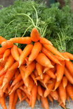 Pile of fresh carrots. On stalks Royalty Free Stock Photography