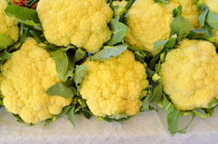 Pile of fresh cauliflower Royalty Free Stock Photography