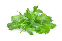 Pile of fresh celery leaf isolated on white background Stock Photography