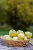 Pile of fresh crab apples Stock Photography