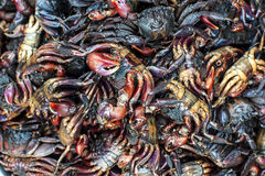 A pile of fresh crab Royalty Free Stock Photo