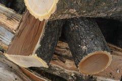 Amur cork tree firewood Royalty Free Stock Photo