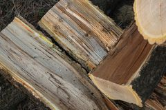 Amur cork tree firewood Royalty Free Stock Photography