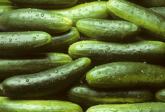 A pile of fresh cucumbers Royalty Free Stock Photos